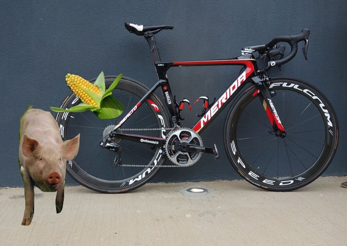 Bahrain Merida Hvar Interview Bricolage - Pigs Dream of Corn Cobs Don't They?